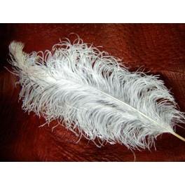 Strusie pióra, białe  60-65cm